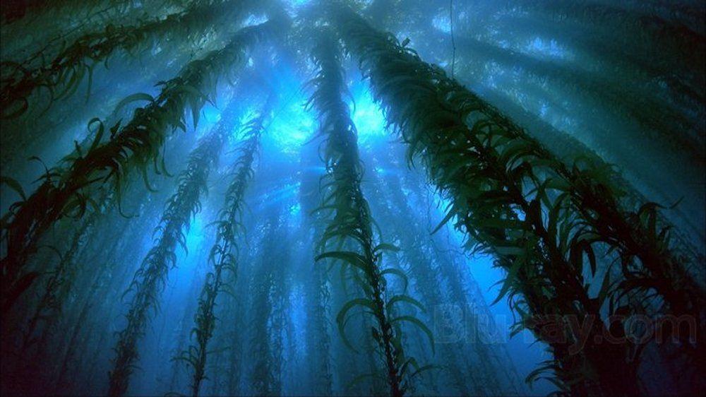 Lving-Sea.jpg