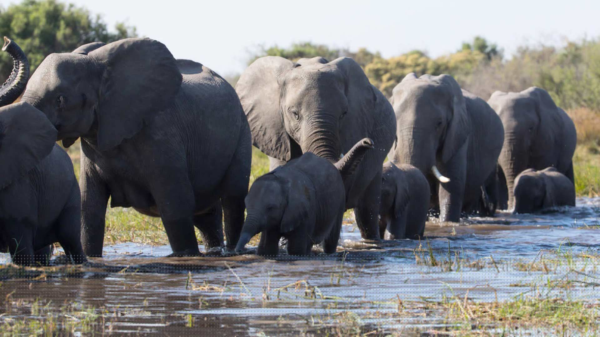 """Best Nature Docs for Earth Day - """"Elephant."""""""