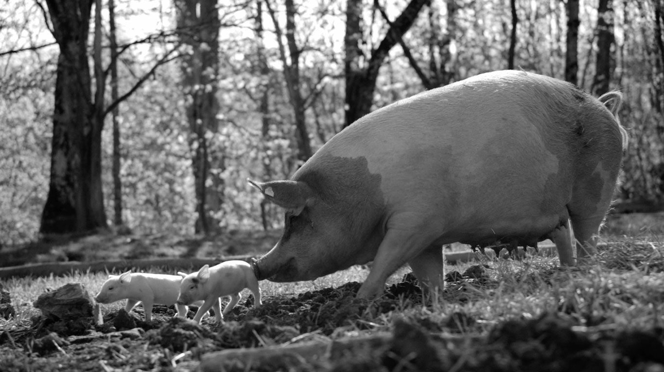 """New Indie Movies - A mother pig and her piglets in """"Gunda."""""""