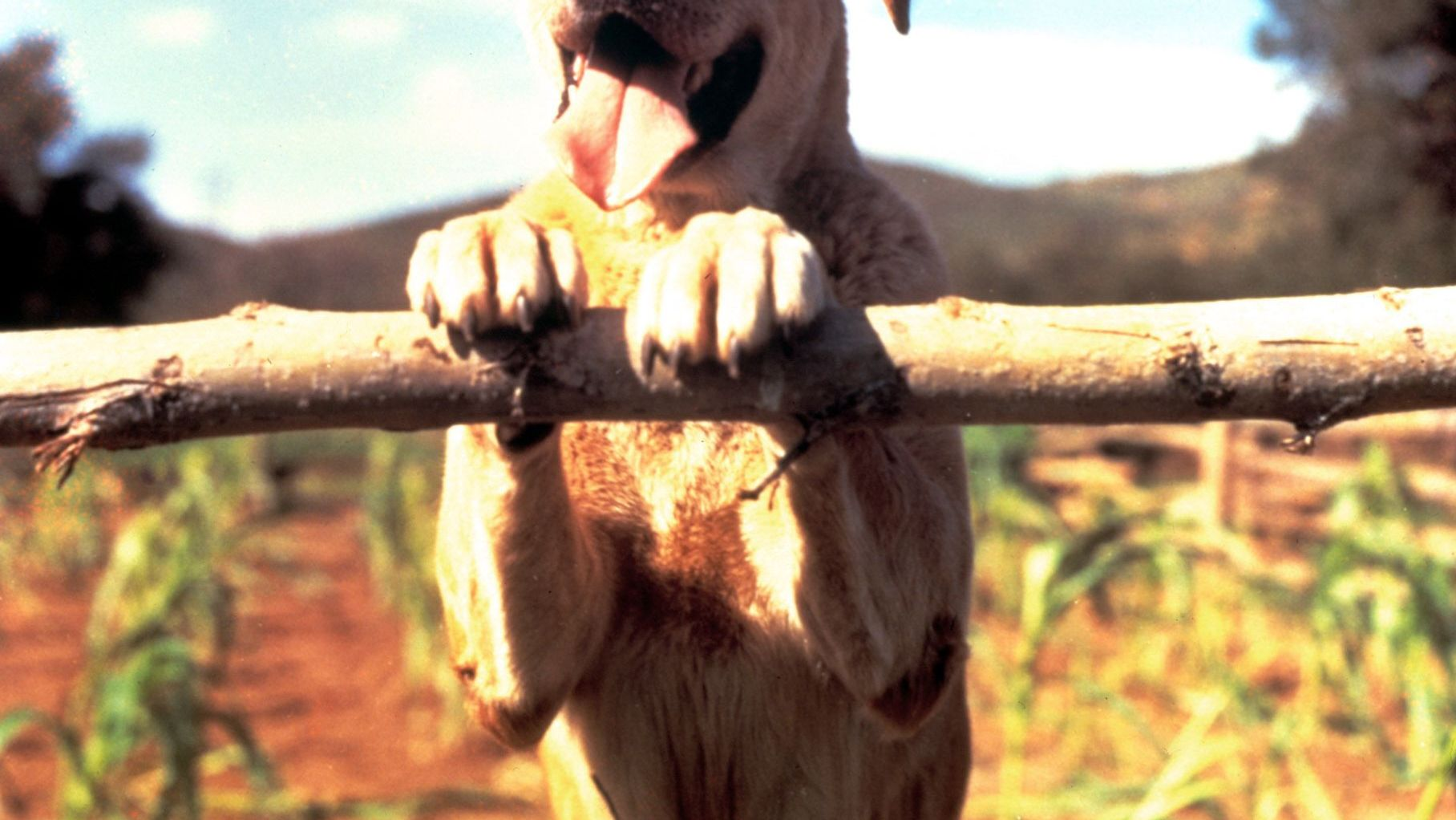 """Old Yeller from """"Old Yeller."""""""